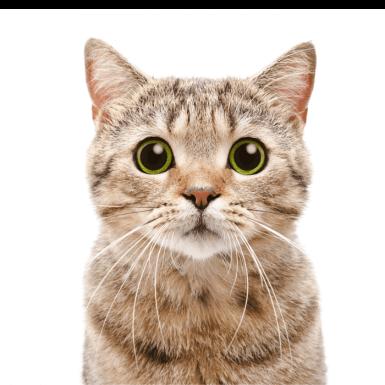 Pisica ochi mari